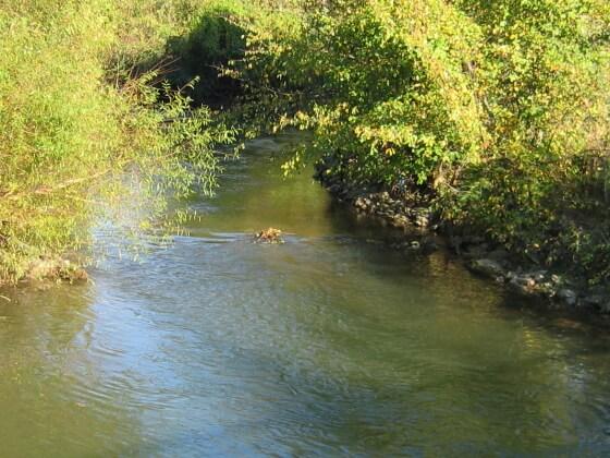 Little Conestoga Creek